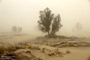 وزش باد شدید همراه با گردوخاک در سیستان/دریای عمان مواج می شود