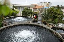 ایران رتبه اول تولید ماهی قزلآلا را در آب شیرین دارد