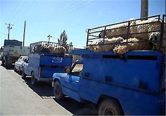 کشف 150 میلیونی احشام غیر مجاز در رودسر