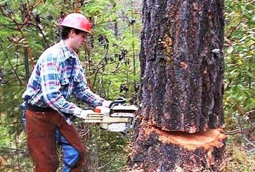 قطع درخت برای ویلاسازی و تولید کاغذ با هیچ منطقی سازگار نیست