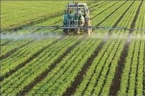 اشتغال 170نفر از محل بسته رونق تولید در بخش کشاورزی ساری