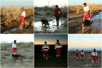 جستجو برای مفقودان حادثه دشت پلنگ با استفاده از سگهای زندهیاب