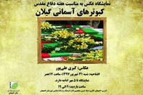 نمایشگاه عکس با عنوان «کبوترهای آسمانی گیلان» در لاهیجان