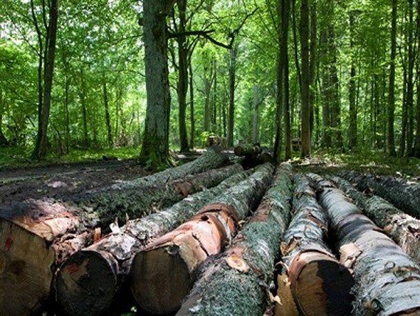 حفاظت و حراست از منابع جنگلی وظیفه  اداره کل منابع طبیعی استان گیلان است