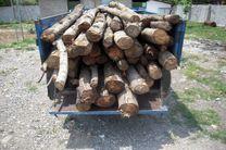 دستگیری 2 قاچاقچی چوب تاغ در آران و بیدگل