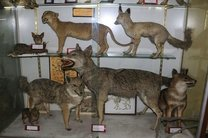 بازدید  از موزه تنوع زیستی محیط زیست اصفهان رایگان است