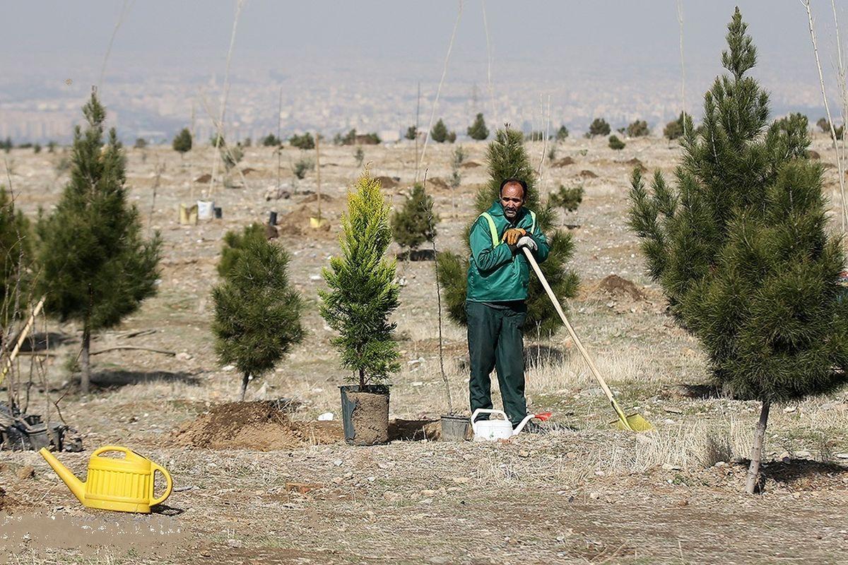 افزایش نیم متری سرانه فضای سبز در ۴ سال! / توزیع عادلانه فضای سبز؛ از سرانه ۶۰ متری برخی مناطق تا سرانه ۵.۲ متری برخی دیگر!