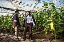 ۷۵۰ میلیارد تومان تسهیلات ارزان قیمت با سود ۴ درصد به سهامداران بخش کشاورزان