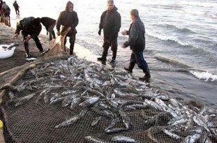 آغازصید ماهی کیلکا دردریای مازندران ،پس از 100روز تعطیلی داوطلبانه