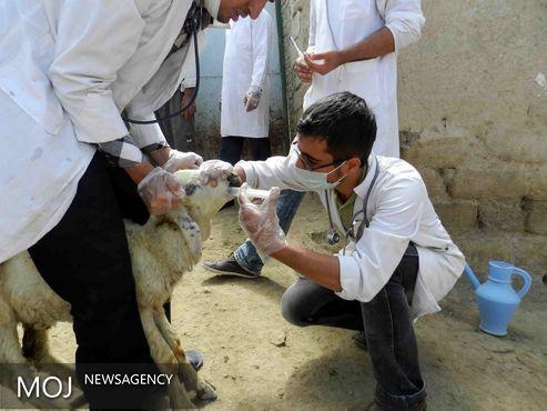 دامپزشکی نقش مهمی در کاهش فقر مناطق روستایی دارد