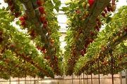 استان اردبیل 4 درصد محصولات کشاورزی کشور را تولید میکند