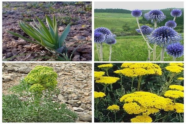 شناسایی بیش از ۲ هزار گونه گیاهی در استان اصفهان