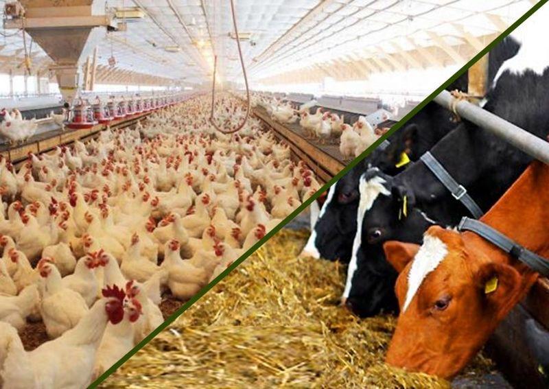 افزایش سالانه تولید یک میلیون تن خوراک دام در دهه اخیر