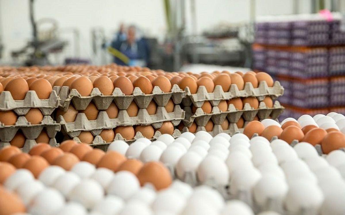 افزایش قیمت تخم مرغ  غیررسمی است