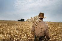خرید ۶۵هزار تن گندم از کشاورزان استان سمنان