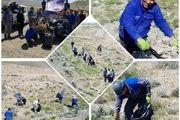 پاک سازی طبیعت در کاشان / جمع آوری نیم تن زباله