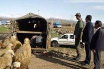 دستگیری باند 4 نفره سارقان احشام در اصفهان