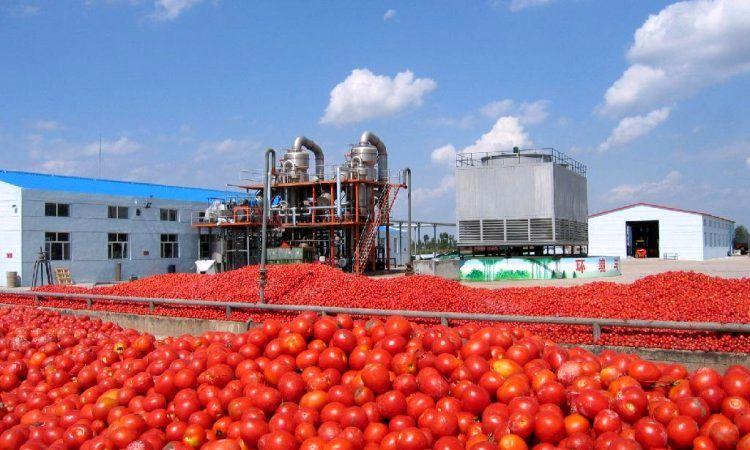 قیمت پیاز و گوجه در امارات کمتر از ایران/بی اطلاعی تشکل ها از صادرکننده های پیاز و گوجه