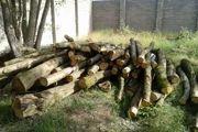 20 تن چوب بلوط قاچاق در نجف آباد کشف شد