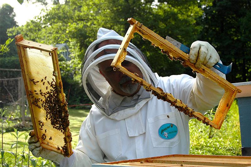 دوره آموزشی زنبورداری مقدماتی
