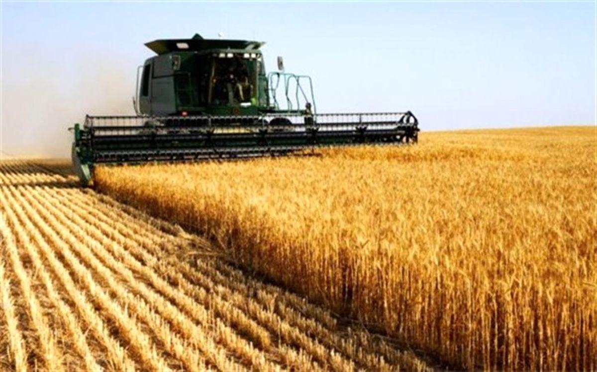 پیش بینی تولید 440 هزار تن گندم طی سالجاری در اردبیل