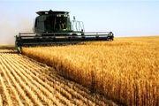 کاهش 47 درصدی خرید گندم در استان اردبیل