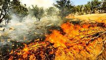 تاکنون ۴۶ هکتار از منابع طبیعی کرمانشاه طعمه حریق شدهاند