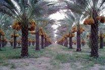 پوشش 120 هکتاری آبیاری کم فشار زمین های کشاورزی خرمشهر