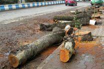 جریمه ۳۵۰ میلیارد تومانی تهرانیها به دلیل قطع درختان