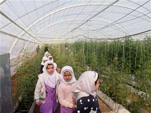 دانش آموزان یزدی از گلخانه مدرن دانشگاه یزد بازدید کردند