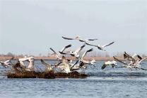 حفاظت از زیستگاه ها در مبدا و مقصد مهمترین عامل حفظ پرندگان مهاجر
