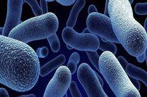 تاثیر استرس بر عملکرد باکتریهای مفید روده