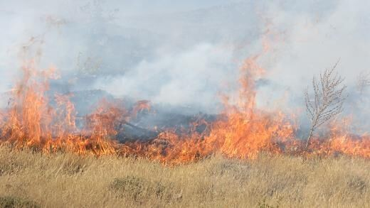 سال گذشته قریب 800 هکتار از مراتع کردستان طعمه حریق شد