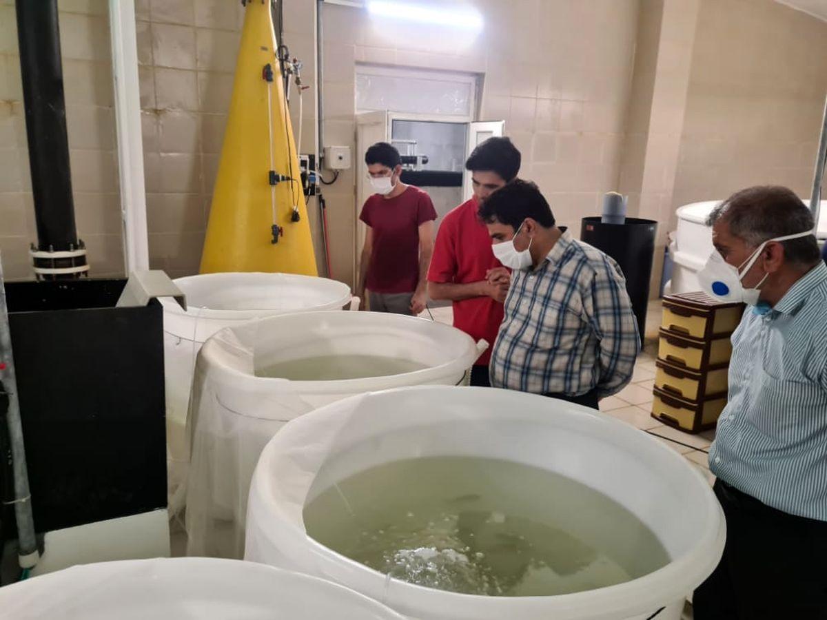 اشتغال بالغ بر سه هزار نفر با تولید۵۰ هزار تن ماهی در دریا