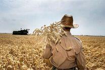 حدود 400 هکتار از مزارع کلاردشت به کشت گندم و جو اختصاص یافت