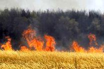 حریق 20 هکتار از مزارع کشاورزی گندم  در گلپایگان