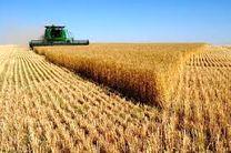 عملیات کشت گندم در 128 هکتار از زمین های زراعی قائم شهر انجام شد