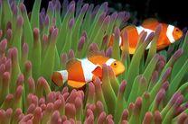 ماهیها هم آرتروز میگیرند