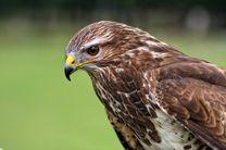 تحویل یک پرنده سارگپه به اداره حفاظت محیط زیست در مبارکه