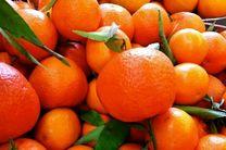 پیش بینی برداشت 700 هزار تن نارنگی در مازندران