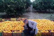دستگاه های نظارتی با دلالان میوه و تره بار لرستان برخورد کنند