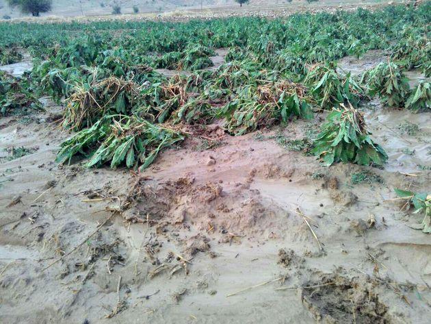 بخش کشاورزی کرمانشاه بیش 77 میلیارد تومان خسارتدیده است