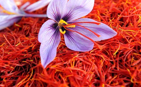 افزایش کشت زعفران به 60 کیلوگرم