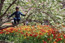باغ گلها در تبریز احداث میشود