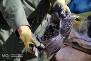 کشف محموله۶۰۰ کیلوگرمی تریاک در بندرلنگه