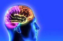 کشف مداری در مغز که به کاهش استرس کمک میکند