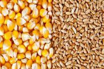 کاهش اندک قیمت غلات در منطقه دریای خزر
