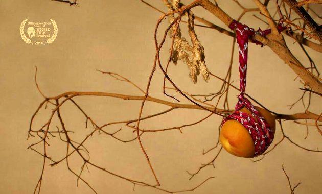رونمایی از پوستر «باغ های زردآلو» در آستانه نمایش در مونترال