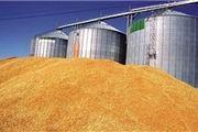 ایران تعرفه گندم را در تجارت آزاد با اتحادیه اقتصادی اوراسیا حذف نمیکند