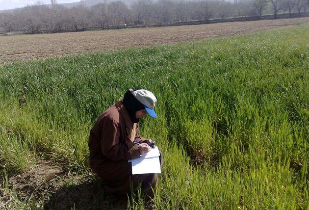 طرح کارورزی 35 هزار فارغ التحصیل کشاورزی و منابع طبیعی اجرا می شود